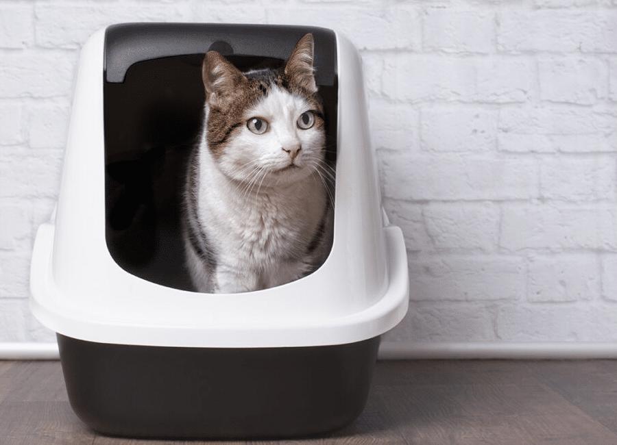 Beste kattenbak
